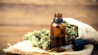 Sobreseen a una mujer que ingresó al país semillas de cannabis para uso medicinal