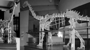 Investigadores argentinos hallan fósil de dinosaurio de 85 millones de años
