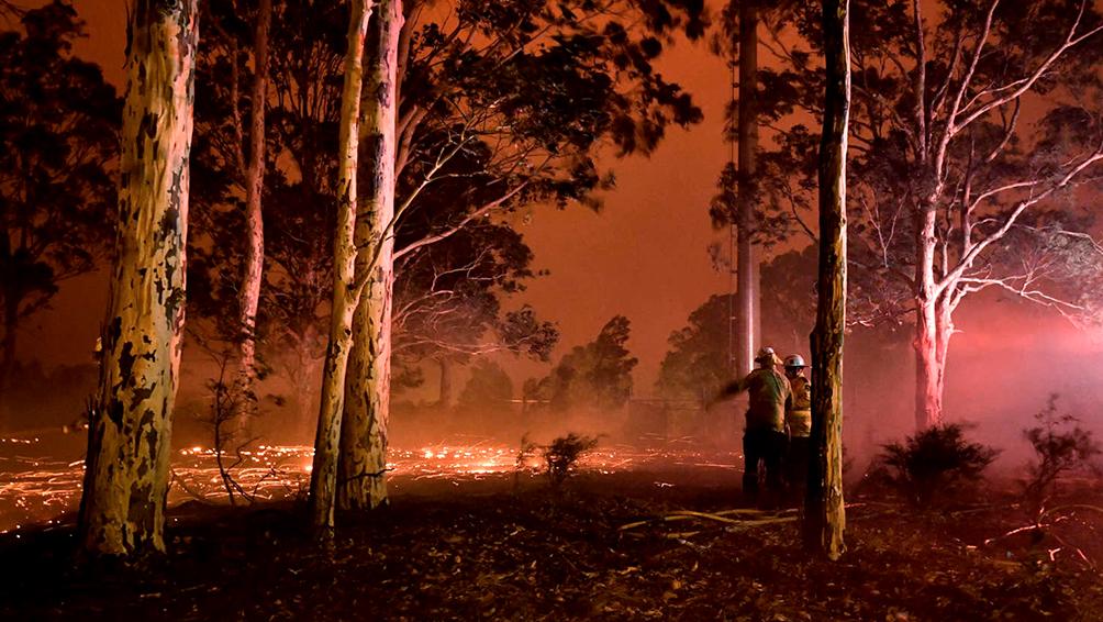 Al menos 327 especies protegidas de animales y plantas en peligro por los incendios en Australia