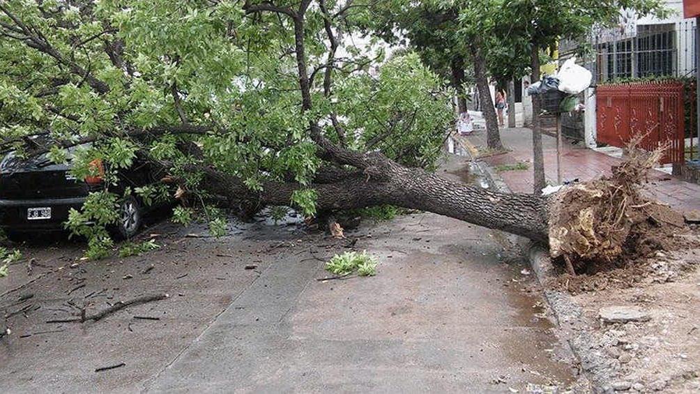 Fuerte temporal de viento y lluvia ocasionó voladuras de techos y caída de árboles