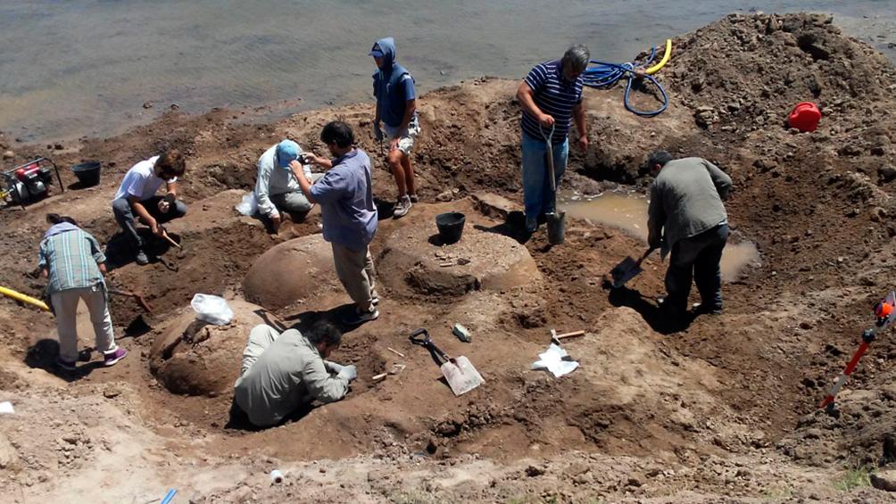 Hallaron restos de cuatro gliptodontes en Bolívar