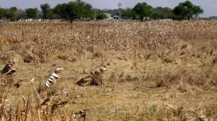 Por la sequía, decretan la emergencia agropecuaria en Rivadavia