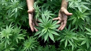 Francia abre la puerta a la legalización del cannabis para uso terapéutico