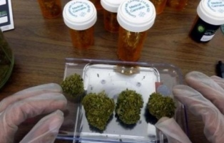 Una empresa española investigará y desarrollará marihuana medicinal