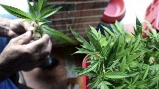 La provincia adhiere a la ley de cannabis medicinal y garantizará el reparto gratuito