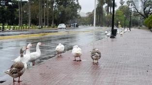 Lloviznas y una máxima de 13 grados en la ciudad de Buenos Aires