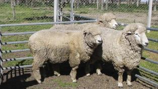 Destacaron la potencialidad del mercado japonés para la carne ovina patagónica