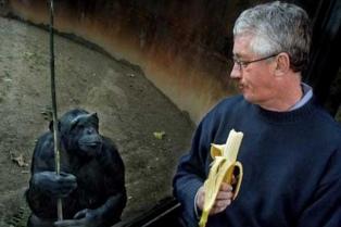 """De Waal: """"Los chimpancés poseen sentido de la justicia"""""""