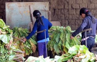 Trabajo infantil: una realidad silenciada y vigente que se agrava por la pandemia