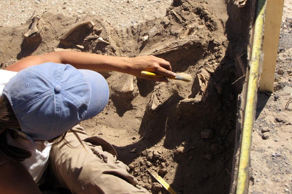 """Los científicos bautizaron el hallazgo como """"Nesher Ramla"""". (Imagen de archivo)"""