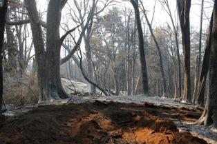 Extinguen el incendio en Lago Puelo y el trabajo se centra ahora en los pequeños focos en Los Alerces