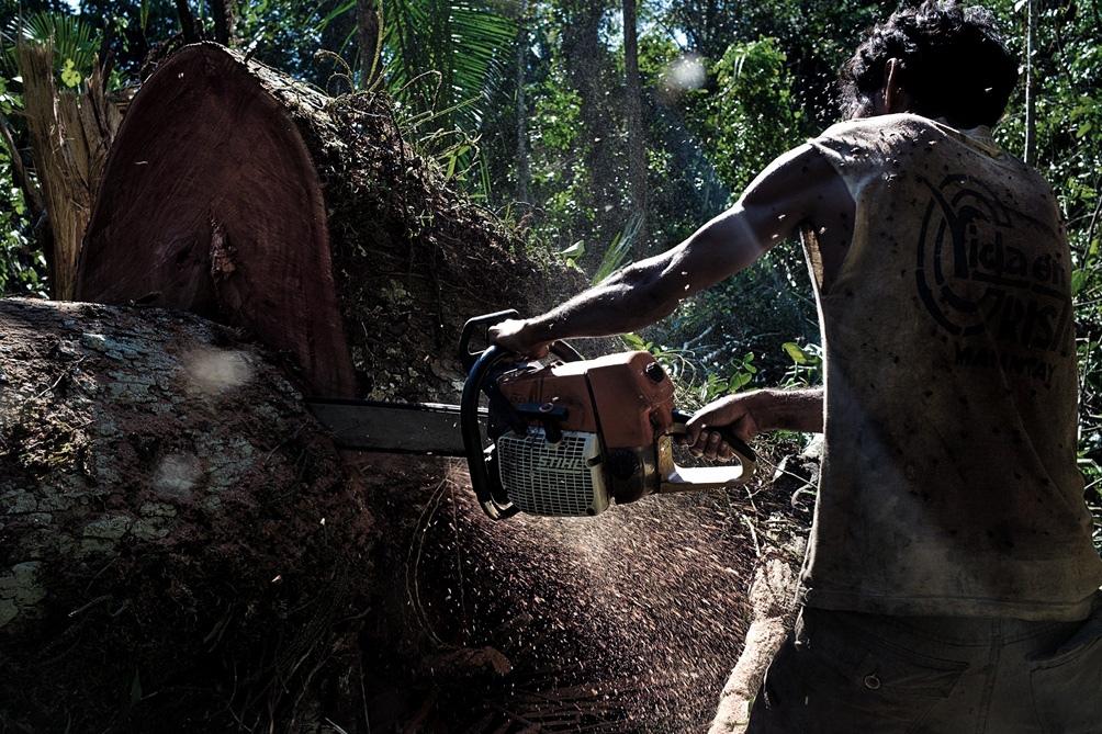 La gestión del ministro de Medio Ambiente, Ricardo Salles, enfrenta una denuncia por exportación ilegal de madera.