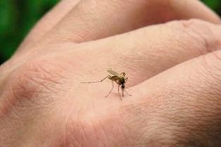 Confirman 30 casos de dengue en Buenos Aires