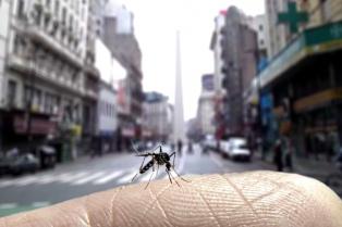 La limpieza de casas puede cortar la epidemia de dengue en dos semanas, según biólogos y sanitaristas