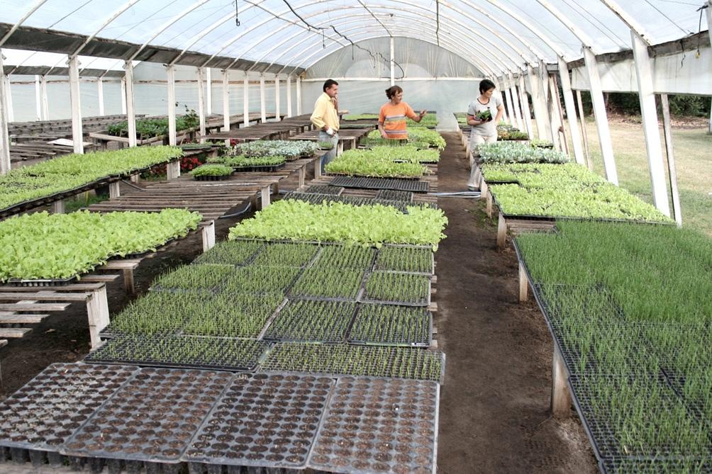 Subsidio a productores hortícolas