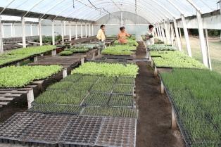 Productores hortícolas comienzan a cobrar subsidios por emergencia agropecuaria