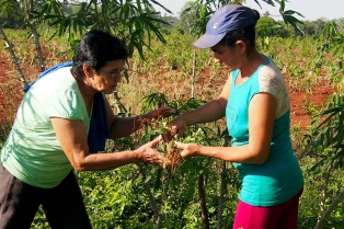 Huertas medicinales, farmacia casera de las familias de Misiones