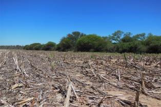 Se deforestaron más de 80.000 hectáreas de bosques en el norte argentino