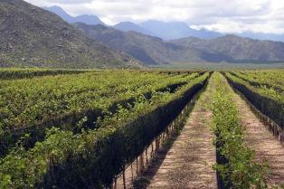 Productores vitícolas de Mendoza y San Juan accederán a financiamiento con baja tasa
