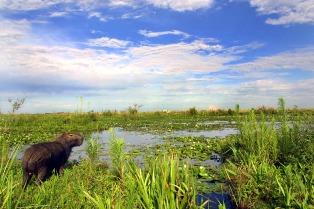 Comenzó en la localidad correntina de Colonia Carlos Pellegrini la Fiesta del Iberá y la Biodiversidad