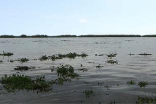 Aviso por crecida del Río de la Plata en la costa del área metropolitana y La Plata