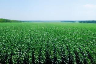 Reacción del agro a la decisión de reintegrar retenciones de soja
