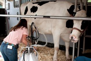 No habrá competencia Holando Argentina en la Rural por la crisis de la lechería