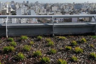 El aire más puro de Buenos Aires se respira en el primer edificio sustentable
