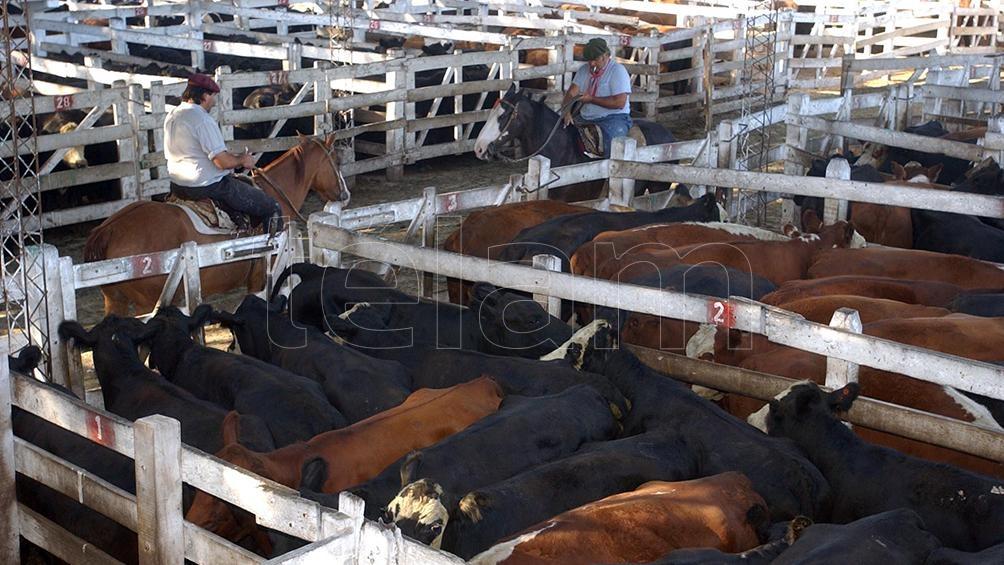 China representa el 80% del total de carnes bovinas exportado por nuestro país,