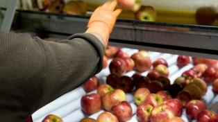 Los productores frutihortícolas esperan mejores precios internacionales para las peras y manzanas