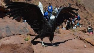 Liberan al cóndor andino número 179 rehabilitado en el Ecoparque porteño