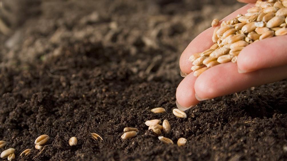 Los nanomateriales se empezaron a aplicar en la agricultura hace menos de 15 años.