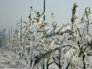 Calculan que las heladas provocaron pérdidas en el 90 % de los cultivos