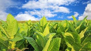 """El sector tabacalero cuestionó la """"presión fiscal"""" y el aumento de las tarifas"""