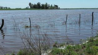 Darán subsidios y ayuda crediticia a productores tamberos afectados por las inundaciones