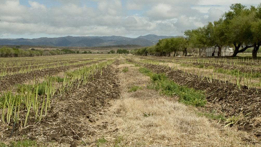 En 2020 el episodio de La Niña impactó con gran escasez de precipitaciones en extensas áreas del país.
