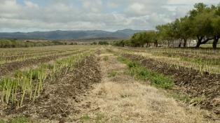 Se disipa el fenómeno La Niña y mejoran las perspectivas para los cultivos de invierno