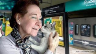 Los perros y gatos podrán viajar en los subtes desde este fin de semana