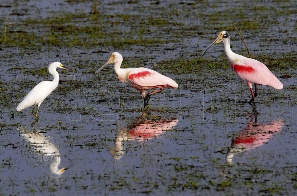 En Argentina, los humedales ocupan una superficie estimada en 600.000 kil{ometros cuadrados.