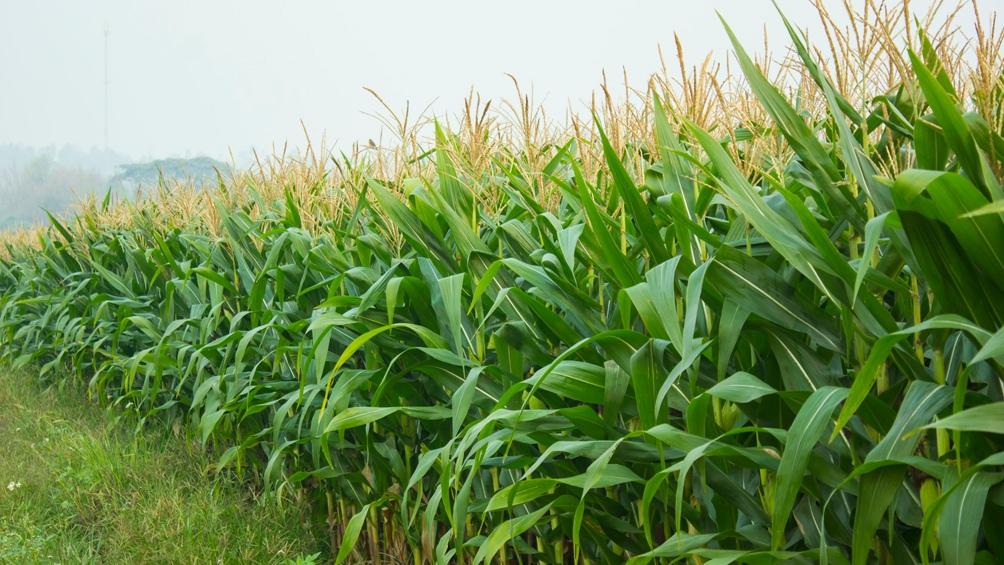ProRindes es una plataforma que cruza datos para predecir el desarrollo de las campañas agrícolas.