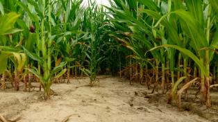 En el INTA Balcarce detectan disminución de nutrientes en la región pampeana