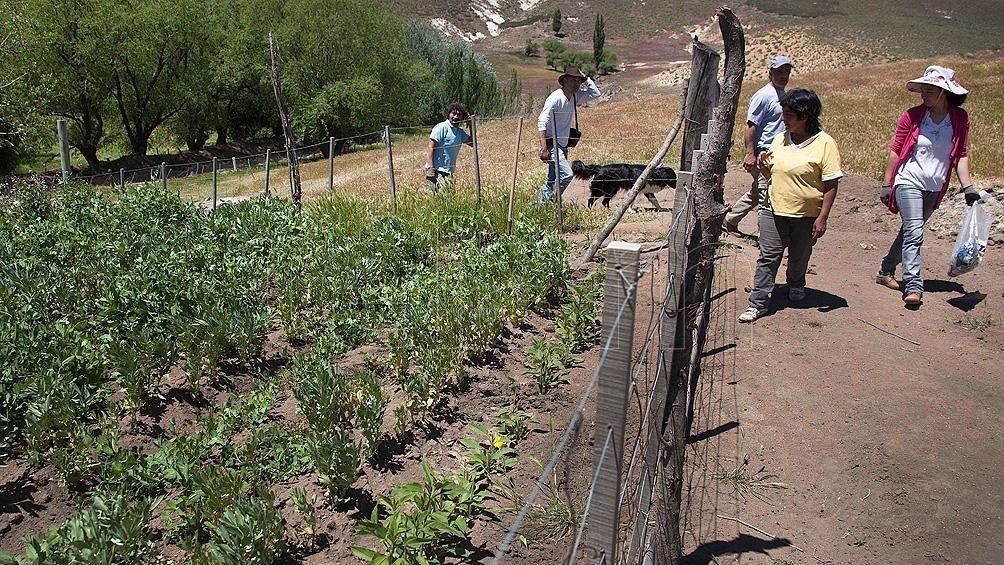 Tecnologías para la agricultura familiar, entre las temáticas de los 451 proyectos.