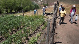 Científicos presentaron 451 proyectos para combatir el hambre en la Argentina