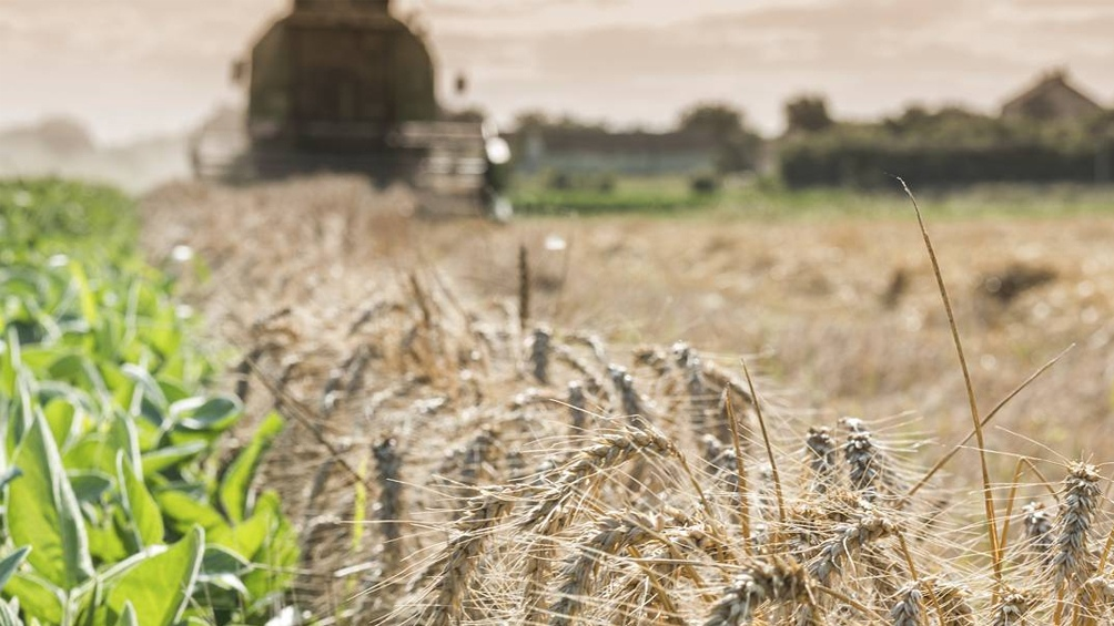 en los núcleos norte y sur y en el centro-este de Entre Ríos, los recientes registros de lluvias facilitaron la recuperación luego de las heladas y ayudando a la incorporación de los fertilizantes.