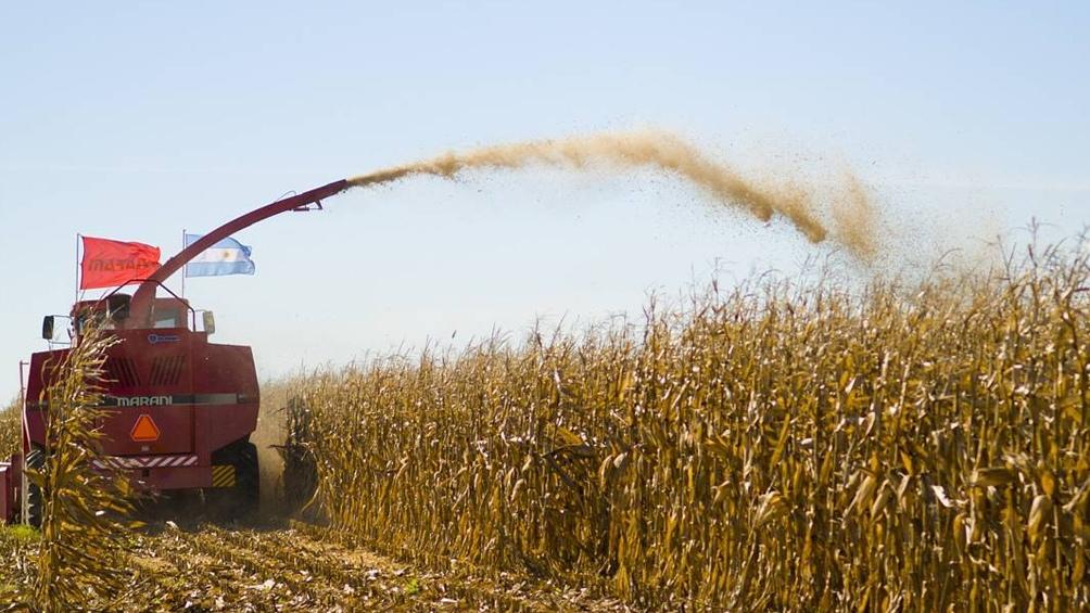 Prevén un aumento de la cosecha de granos hasta 135 millones de toneladas en 2021/22