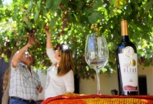 Las exportaciones de vino Malbec se multiplicaron por 37 en los últimos 15 años