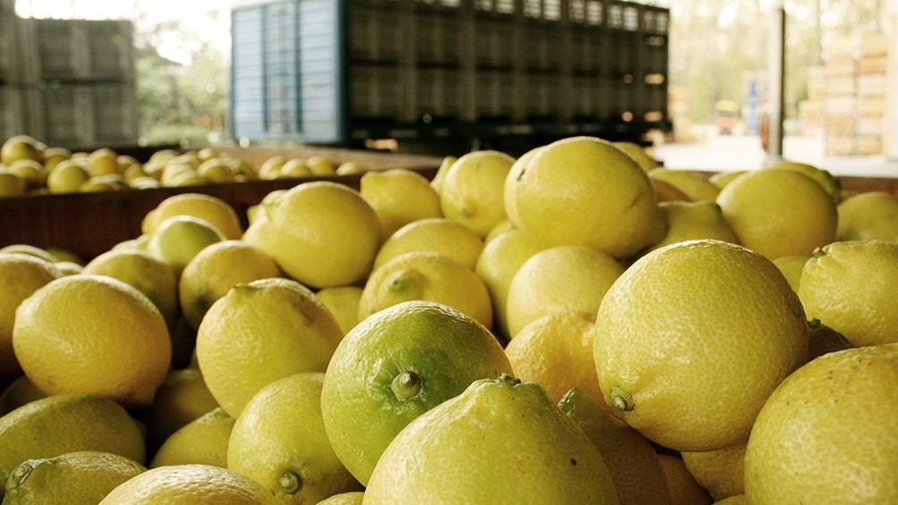 En marzo pasado la UE llevó a cabo una auditoría al Programa de Exportación de Fruta Fresca Cítrica, para constatar la implementación de las medidas correctivas exigidas para la exportación de cítricos.