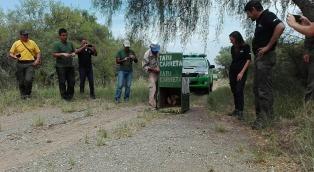 Liberan a un oso melero en una reserva natural