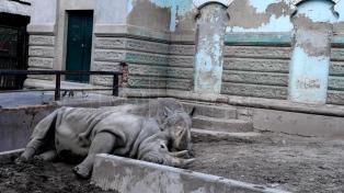 Ya se trasladaron más de 800 animales a otros predios del país y del exterior
