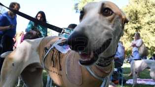 Avanza en Diputados el tratamiento en comisión de proyectos sobre maltrato animal